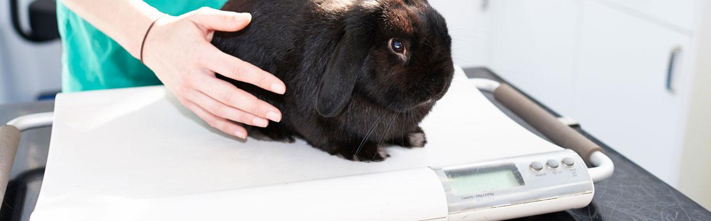 Dental care for rabbits