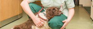 Dog cuddling nurse